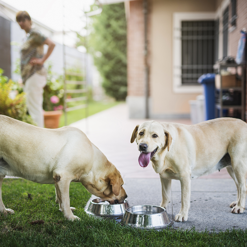 Dogs eating
